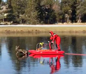 """Firefighter Jeff """"JJ"""" Johnston using an ice-rescue sled to gently nudge a deer off a frozen pond in Sunriver, Ore. (Benjamin O'Keefe/L4262 Sunriver Professional Firefighters via AP)"""