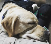 How to interact with service animals in medical emergencies