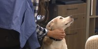 911 center foster dog helps lower dispatcher stress