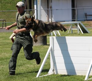 K-9 Doby was assisting in an armed robbery call when he collapsed and stopped breathing. (Photo/ODMP.org)