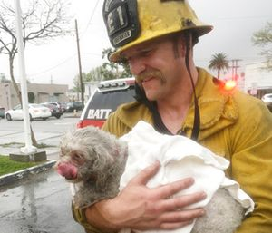 Klein spent minutes giving mouth-to-snout resuscitation to the dog, who was pulled from a burning apartment. (Courtesy of Crystal Lamirande via AP)