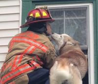 Viral photo: Dog thanks firefighter after roof rescue