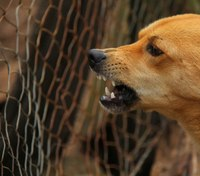 Dealing with dogs on SWAT operations: 10 tactical options
