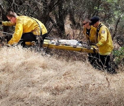 Firefighters rescue 12-year-old dog stuck at bottom of ravine