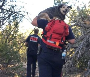 Firefighters took turns carrying a dog who was stranded with hikers during the mile-and-a-half trip back to command after rescuing them. (Photo/BCFD)