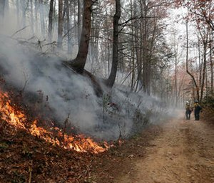 Firefighters walk down a dirt road a wildfire burns a hillside in Clayton, Ga. (AP Photo/John Bazemore)