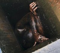Calif. man rescued 2 days after getting stuck in restaurant grease vent
