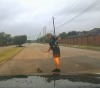 Video: Texas officer rescues wounded hawk in the road
