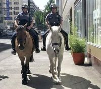 Ore. cops arrest man accused of jump-kicking police horse