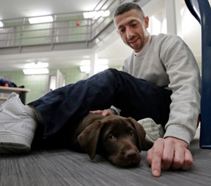 """Inmate Justin Martin bonds with a chocolate lab puppy at Merrimack County Jail in Boscawen, N.H. The New Hampshire jail is the first in the state to partner prisoners with the """"Hero Pups"""" program to foster and train puppies with the goal of placing them with military veterans and first responders in need of support dogs. (AP Photo/Elise Amendola)"""