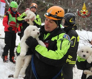 Italian firefighters with rescued puppies. (Photo/Vigilfuoco Firefighters)