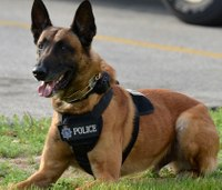 Mass. bill would allow EMS providers to treat injured K-9s