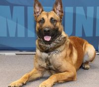 Wis. K-9 continues recovery from stabbing