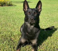 K-9 killed, suspect injured in Fla. mall shooting