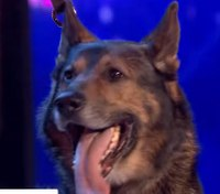 'Heroic' K-9 moves judges to tears on 'Britain's Got Talent'