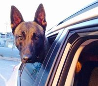 NY K-9 dies after collapsing during training