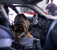 How e-collars can improve K-9 training
