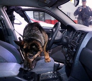 In this Tuesday, May 30, 2017, photo Massachusetts State Police K-9, Maximus, searches a car for drugs with Trooper Brian Bonia, left, during a training session in Revere, Mass. (AP Photo/Charles Krupa)