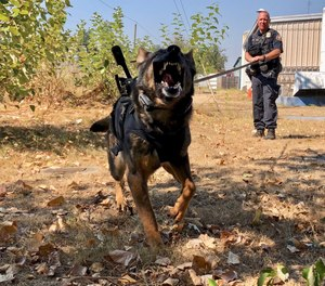 In this Sept. 6, 2018, photo, Portland Police K-9 Officer Shawn Gore gives commands to police dog Jasko, in Portland, Ore. (AP Photo/Gillian Flaccus)