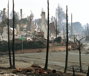 Chimneys of homes destroyed in the Oakland Hills by fire are visible beyond the black, charred trunks of trees also consumed by the firestorm which swept through the area in Oakland, Ca., Oct. 22, 1991. (AP Photo/Olga Shalygin)