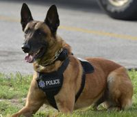 Wis. first responders train in K-9 first aid