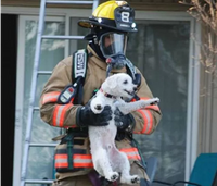 Firefighters rescue 'smiling' puppy from apartment