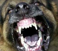 Reality Training: Dealing with aggressive dogs