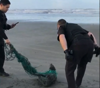 Video: Wash. police free seal trapped in fishing net