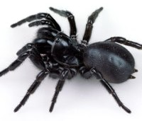 Research: Spider venom may offer stroke therapy