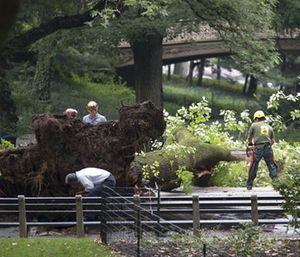 FDNY said an adult and three children have been taken to a hospital after the tree fell in Central Park.(AP Photo/Mary Altaffer)