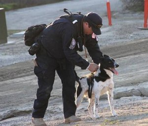 Rocket is helping out after Hurricane Harvey as a search dog trained to work with responders in disasters. (Photo/National Disaster Search Dog Foundation)