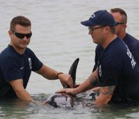 Fla. firefighters assist in pygmy killer whale rescue