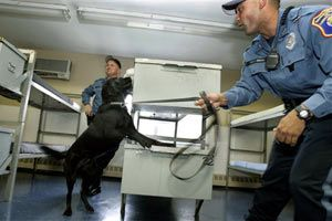 New Jersey corrections officer Joseph Nicholas encourages his dog, Izzy, to find a hidden cell phone in a training room at the Albert C. Wagner Youth Correctional Facility in Bordentown, N.J. (AP Photo/Mel Evans, File)