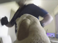 Video: Australian sniffer dog sweeps prison cells for contraband