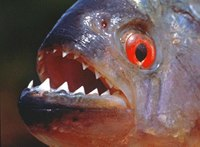 Indonesian anti-drug official wants piranhas, tigers to go with crocodile guards