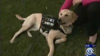 Therapy dog rides along with paramedic