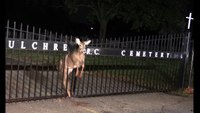 NJ firefighters rescue deer trapped in fence