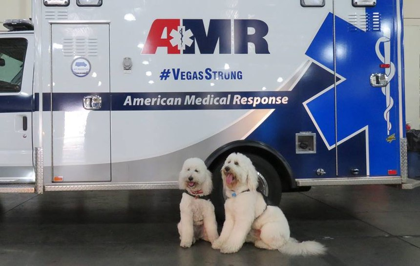 (Photo/AMR Therapy Dog Team Facebook)