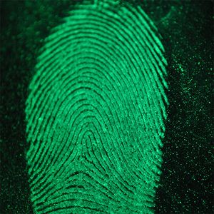 Fingerprint lifted from a steering wheel cover with fluorescent magnetic powder. Photo taken with a macro lens. (Photo/Joseph Jaynes)