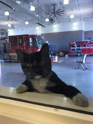 """Bootsie just showed up here at our station the first of December 2018....she's fitting in just fine,"" JJ Lewis said. (Photo/JJ Lewis)"