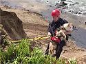 Calif. firefighters rescue dog from cliff