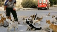 Syrian responder cares for war-torn city's abandoned cats