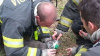 Video: Firefighters use CPR to revive cat
