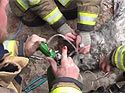 DC firefighters revive dog after fire
