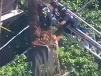 Firefighters rescue trimmer stuck in tree