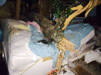 Tree crashes through NY bedroom, crushes sleeping woman